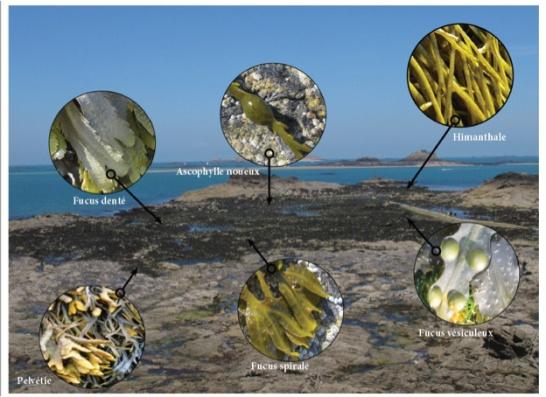 Reconnaitre les algues