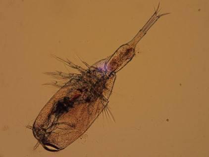 BioOcean-Zooplancton1