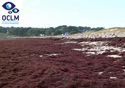 02-Marée d'algues rouges