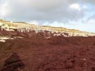 10-Grosse marée d'algues rouges
